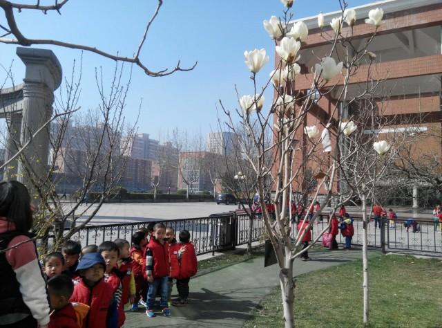 幼儿园小花园